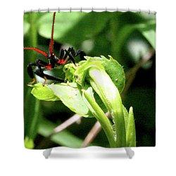 Shower Curtain featuring the photograph Assassin Bug by Meta Gatschenberger
