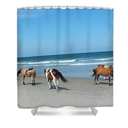 Assateague 1 Shower Curtain