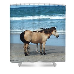 Assateague 3 Shower Curtain