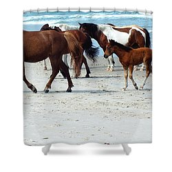 Assateague 4 Shower Curtain