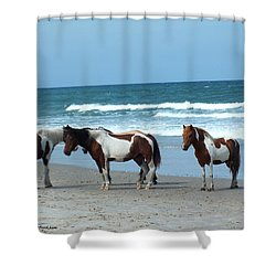 Assateague 5 Shower Curtain