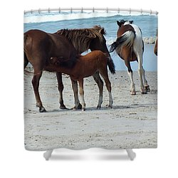 Assateague 6 Shower Curtain