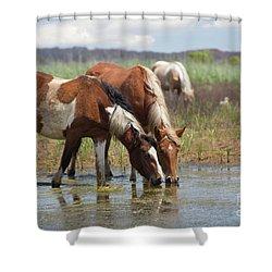 Assateague Ponies Tale Drink Shower Curtain