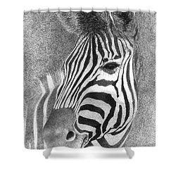 Shower Curtain featuring the drawing Assiduous by Phyllis Howard