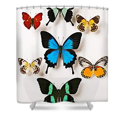 Assorted Butterflies Shower Curtain by Garry Gay