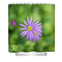 Shower Curtain featuring the photograph Pilliga Daisy by Tim Gainey