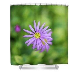 Pilliga Daisy Shower Curtain by Tim Gainey