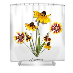 Asteraceae Shower Curtain