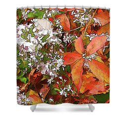 Shower Curtain featuring the photograph Asters And Creeper by Betsy Zimmerli