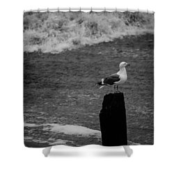 Shower Curtain featuring the photograph At His Post by Lora Lee Chapman