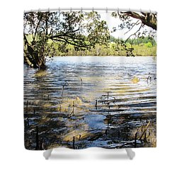 Shower Curtain featuring the photograph At Muddy Shady Mangroves 2 by Dianne  Connolly