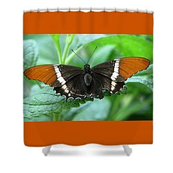 At Rest Shower Curtain by Angela Davies