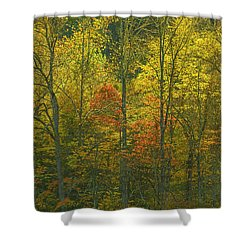 At The Edge Of The Forest Shower Curtain