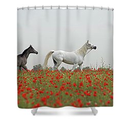 At The Poppies' Field... Shower Curtain by Dubi Roman