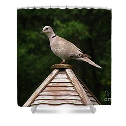 At The Top Of The Bird Feeder Shower Curtain by Donna Brown