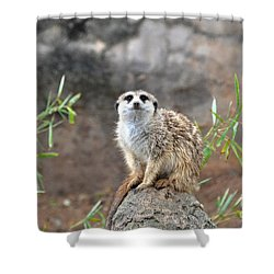 Shower Curtain featuring the photograph At The Watch by John Black