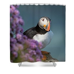Atlantic Puffin - Scottish Highlands Shower Curtain