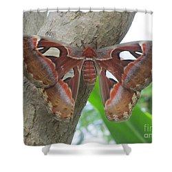 Atlas Butterfly Shower Curtain by Jeepee Aero