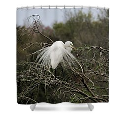 Attractive Plumage Shower Curtain