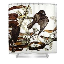 Audubon: Crow Shower Curtain by Granger