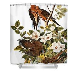 Audubon: Dove Shower Curtain by Granger