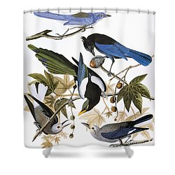 Audubon: Jay And Magpie Shower Curtain by Granger