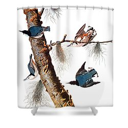 Audubon: Nuthatch Shower Curtain by Granger