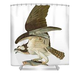 Audubon: Osprey Shower Curtain