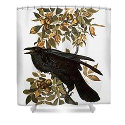 Audubon: Raven Shower Curtain by Granger