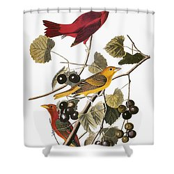 Audubon: Tanager Shower Curtain by Granger