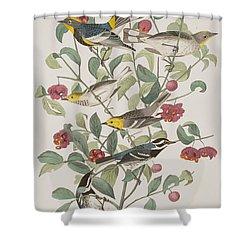 Audubons Warbler Hermit Warbler Black-throated Gray Warbler Shower Curtain