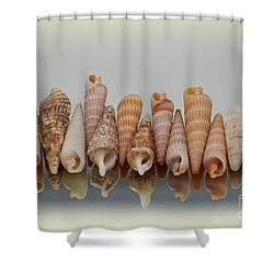 Auger Shells Shower Curtain