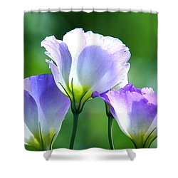 Shower Curtain featuring the photograph August Echoes by Byron Varvarigos