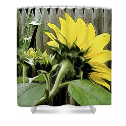 Shower Curtain featuring the photograph August Motif by Betsy Zimmerli