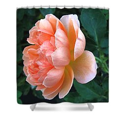 Shower Curtain featuring the photograph August Rose 09 by Joyce Dickens