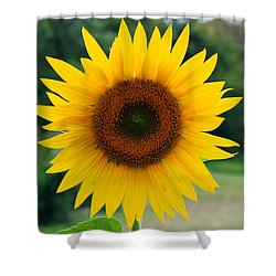 August Sunflower Shower Curtain