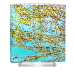 Shower Curtain featuring the photograph  Aura Of Springtime by Connie Handscomb