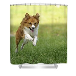 Aussi At Play Shower Curtain