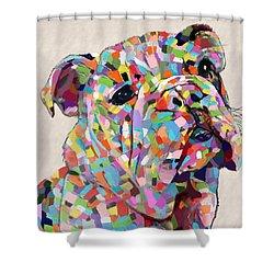 Australian Bulldog  Shower Curtain