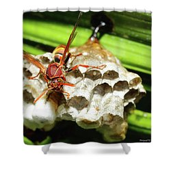 Australian Papper Wasp 772 Shower Curtain