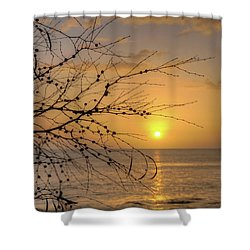 Australian Sunrise Shower Curtain by Geraldine Alexander