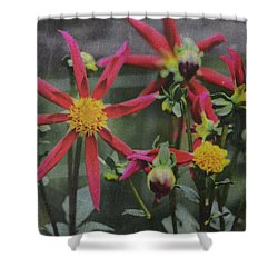 Windmill Dahlias 101115415 Shower Curtain