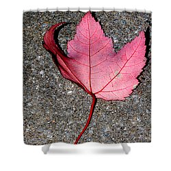 Autum Maple Leaf 2 Shower Curtain