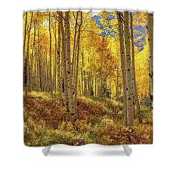 Autumn Aspen Forest Aspen Colorado Panorama Shower Curtain