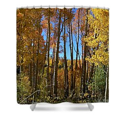 Autumn Aspen Grove Dixie National Forest Utah Shower Curtain