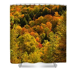 Autumn At Acadia Shower Curtain by Brent L Ander