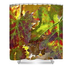 Shower Curtain featuring the photograph Autumn At Lachish Vineyards 2 by Dubi Roman