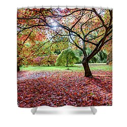 Autumn At Westonbirt Arboretum Shower Curtain