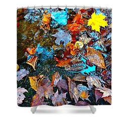 Autumn B 2015 124 Shower Curtain by George Ramos
