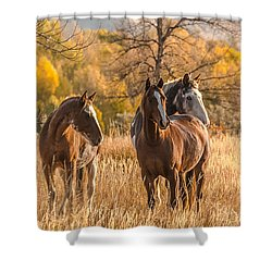 Shower Curtain featuring the photograph Autumn Beauty At Dawn by Yeates Photography